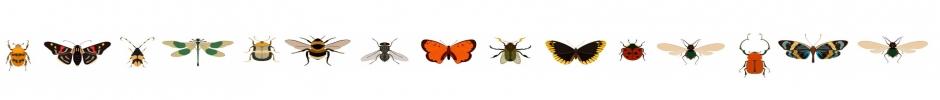 bandeau insecte