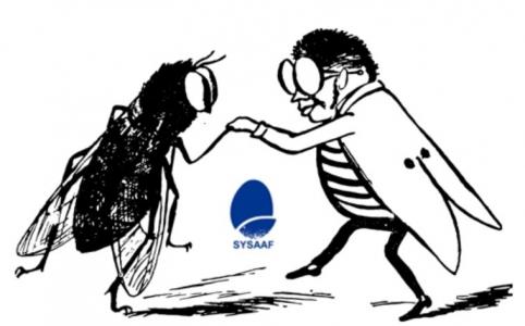 Le secteur entomocole du SYSAAF s'agrandit
